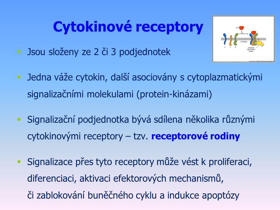 Cytokinové receptory  Jsou složeny ze 2 či 3 podjednotek  Jedna váže cytokin, další asociovány s cytoplazmatickými signalizačními molekulami (protein-kinázami)  Signalizační podjednotka bývá sdílena několika různými cytokinovými receptory – tzv.