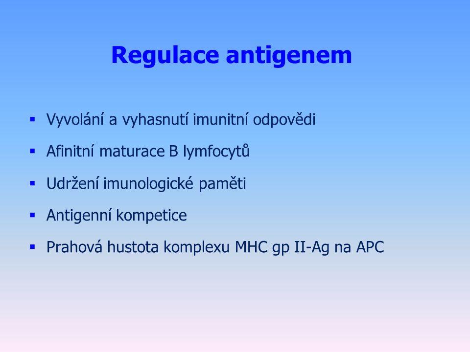 Regulace antigenem  Vyvolání a vyhasnutí imunitní odpovědi  Afinitní maturace B lymfocytů  Udržení imunologické paměti  Antigenní kompetice  Prahová hustota komplexu MHC gp II-Ag na APC