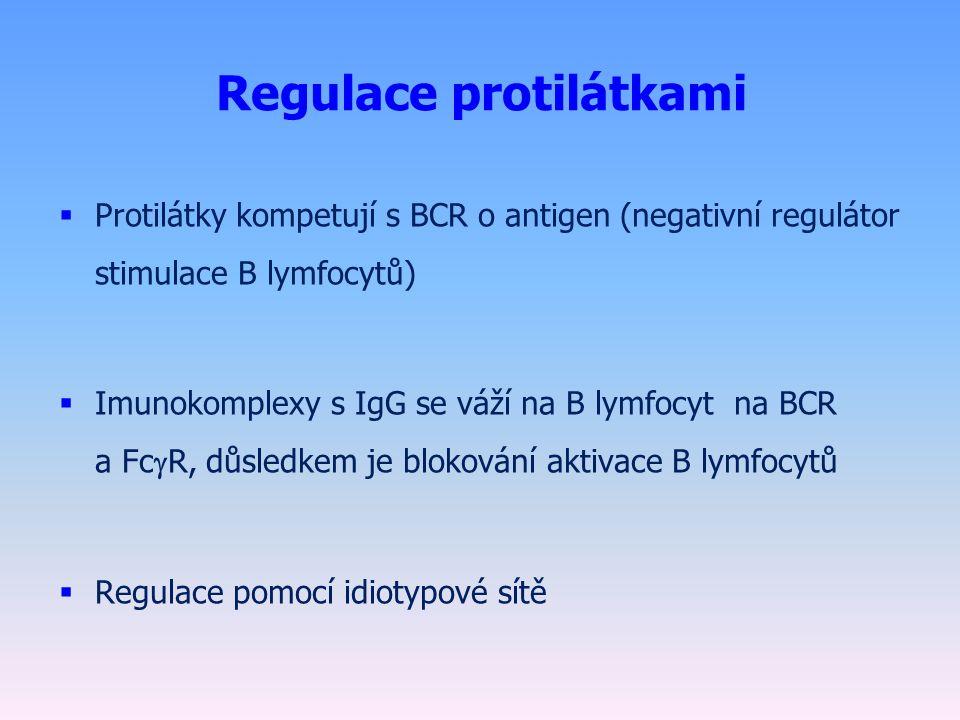 Regulace protilátkami  Protilátky kompetují s BCR o antigen (negativní regulátor stimulace B lymfocytů)  Imunokomplexy s IgG se váží na B lymfocyt na BCR a Fc  R, důsledkem je blokování aktivace B lymfocytů  Regulace pomocí idiotypové sítě