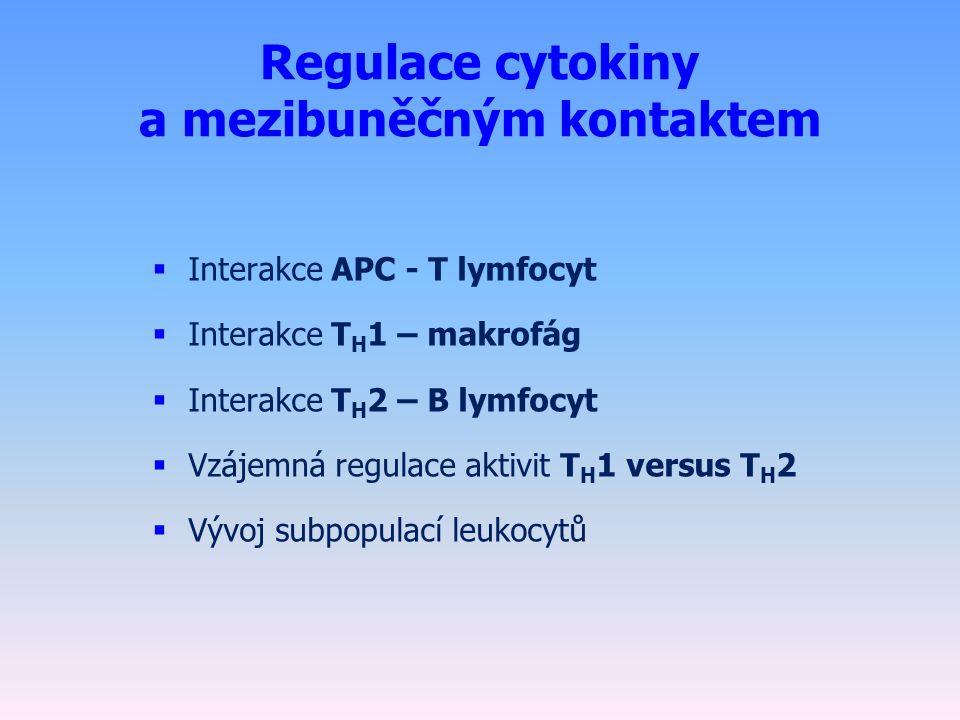 Regulace cytokiny a mezibuněčným kontaktem  Interakce APC - T lymfocyt  Interakce T H 1 – makrofág  Interakce T H 2 – B lymfocyt  Vzájemná regulace aktivit T H 1 versus T H 2  Vývoj subpopulací leukocytů