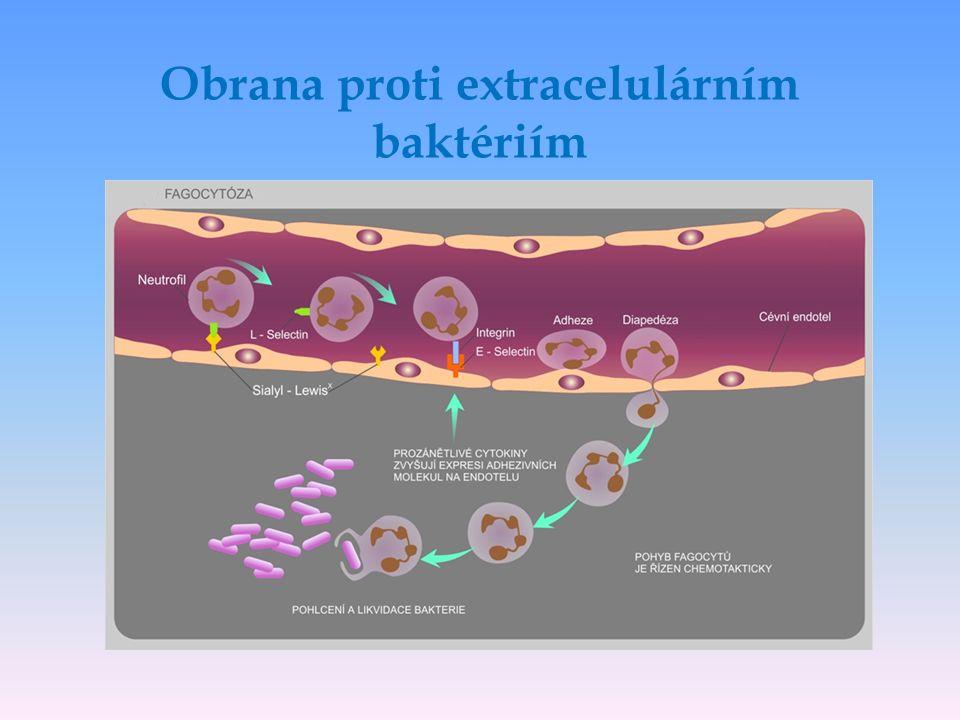 Obrana proti extracelulárním baktériím