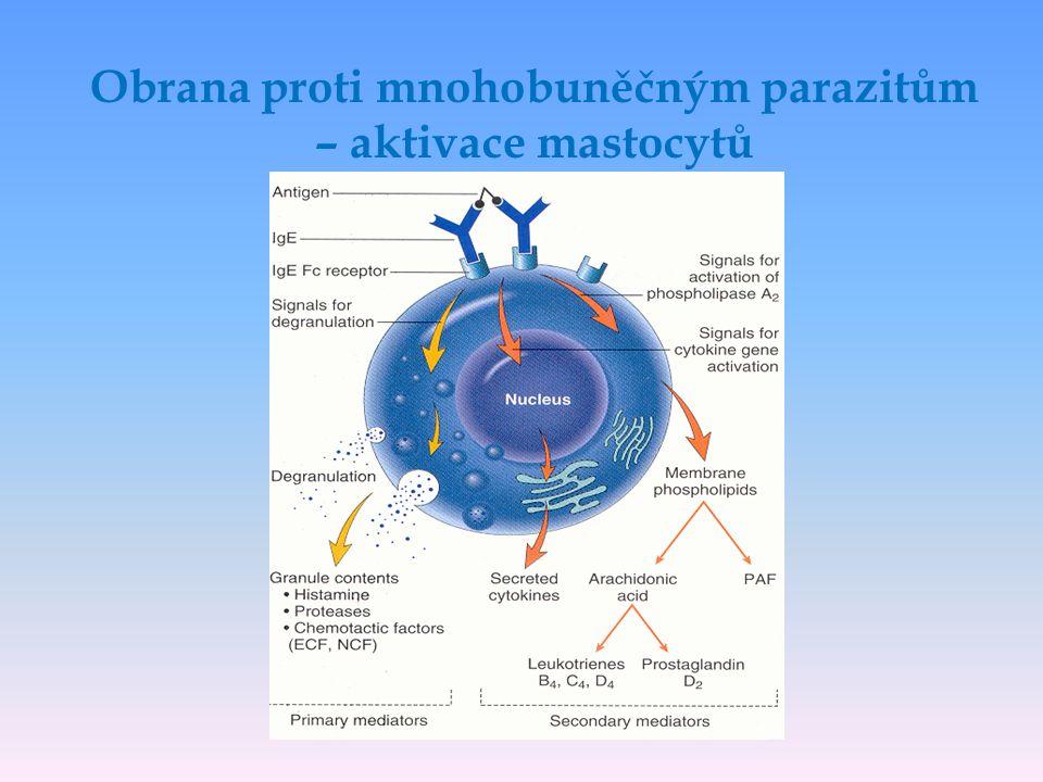 Obrana proti mnohobuněčným parazitům – aktivace mastocytů