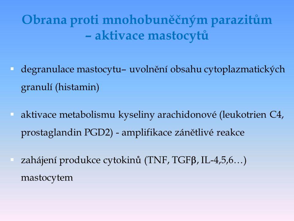  degranulace mastocytu– uvolnění obsahu cytoplazmatických granulí (histamin)  aktivace metabolismu kyseliny arachidonové (leukotrien C4, prostaglandin PGD2) - amplifikace zánětlivé reakce  zahájení produkce cytokinů (TNF, TGF , IL-4,5,6…) mastocytem Obrana proti mnohobuněčným parazitům – aktivace mastocytů