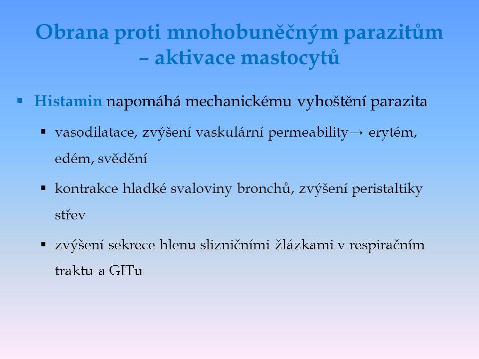  Histamin napomáhá mechanickému vyhoštění parazita  vasodilatace, zvýšení vaskulární permeability→ erytém, edém, svědění  kontrakce hladké svaloviny bronchů, zvýšení peristaltiky střev  zvýšení sekrece hlenu slizničními žlázkami v respiračním traktu a GITu