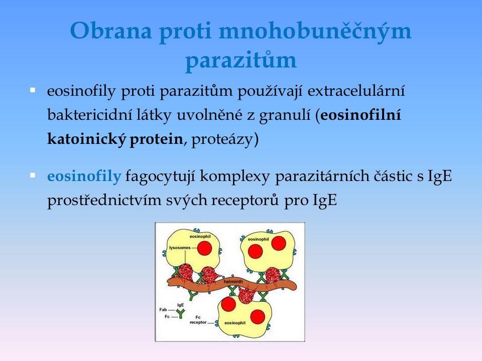 Obrana proti mnohobuněčným parazitům  eosinofily proti parazitům používají extracelulární baktericidní látky uvolněné z granulí ( eosinofilní katoinický protein, proteázy )  eosinofily fagocytují komplexy parazitárních částic s IgE prostřednictvím svých receptorů pro IgE