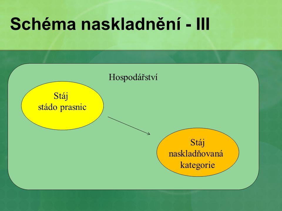 Schéma naskladnění - III Hospodářství Stáj stádo prasnic Stáj naskladňovaná kategorie