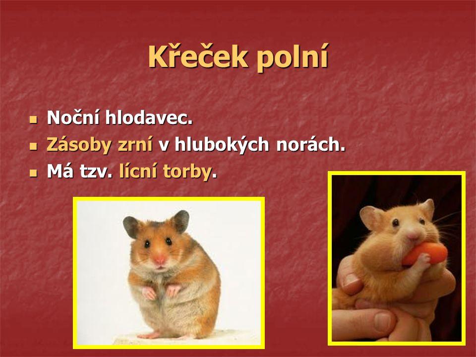 POTKAN x KRYSA 14