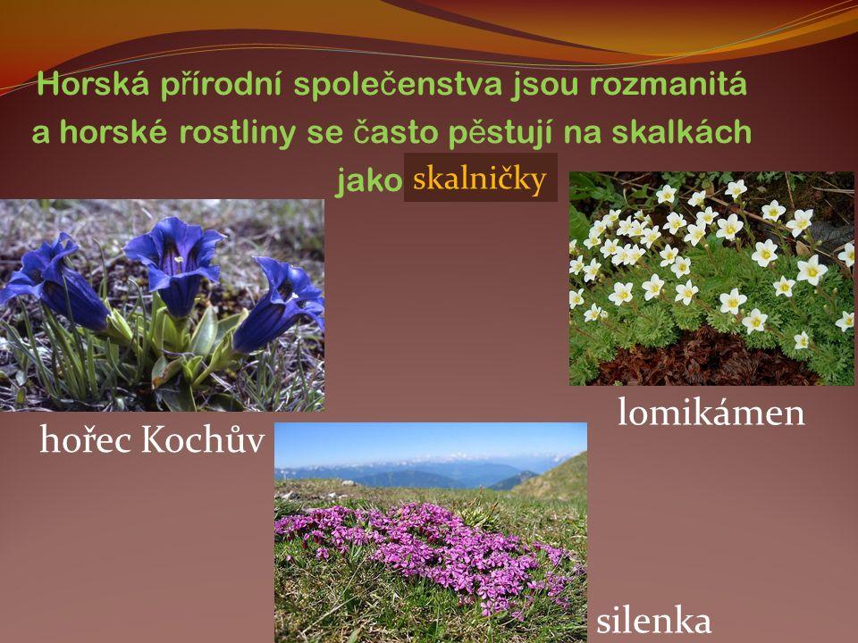 Horská p ř írodní spole č enstva jsou rozmanitá a horské rostliny se č asto p ě stují na skalkách jako….