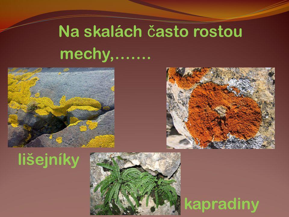 Na skalách č asto rostou mechy,……. lišejníky kapradiny
