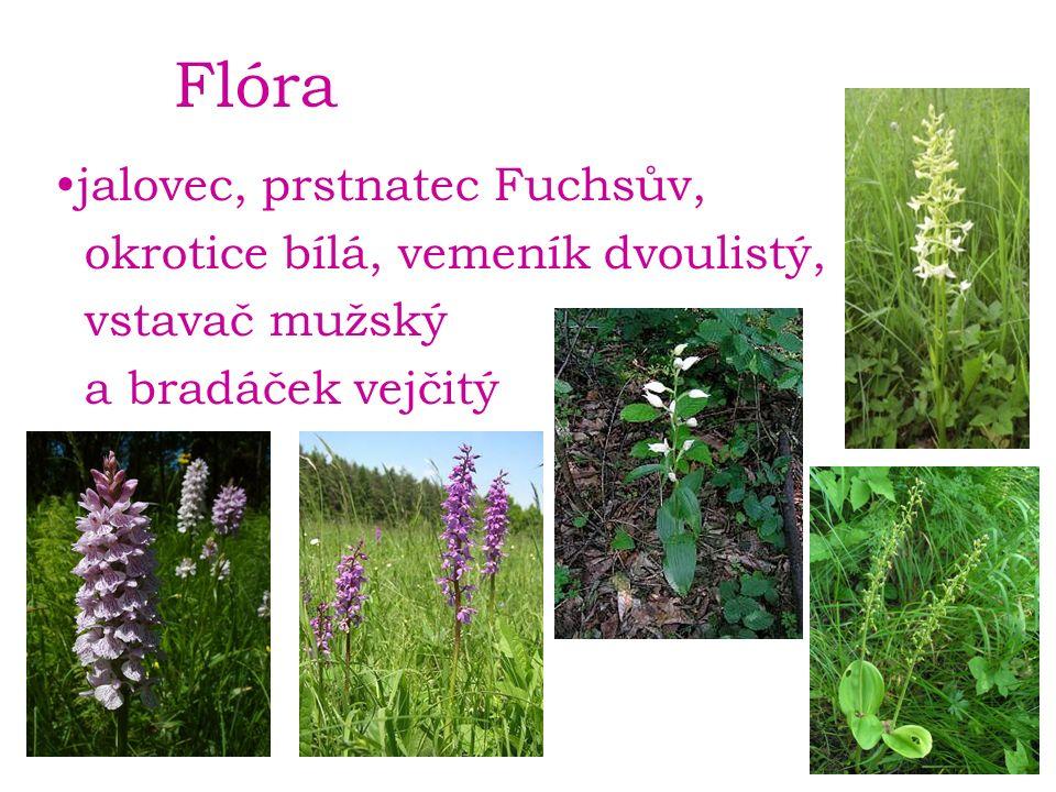 Flóra jalovec, prstnatec Fuchsův, okrotice bílá, vemeník dvoulistý, vstavač mužský a bradáček vejčitý