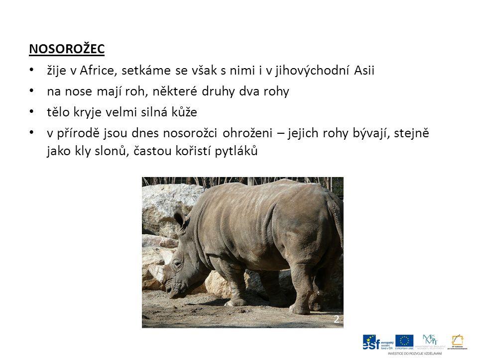 NOSOROŽEC žije v Africe, setkáme se však s nimi i v jihovýchodní Asii na nose mají roh, některé druhy dva rohy tělo kryje velmi silná kůže v přírodě jsou dnes nosorožci ohroženi – jejich rohy bývají, stejně jako kly slonů, častou kořistí pytláků 2