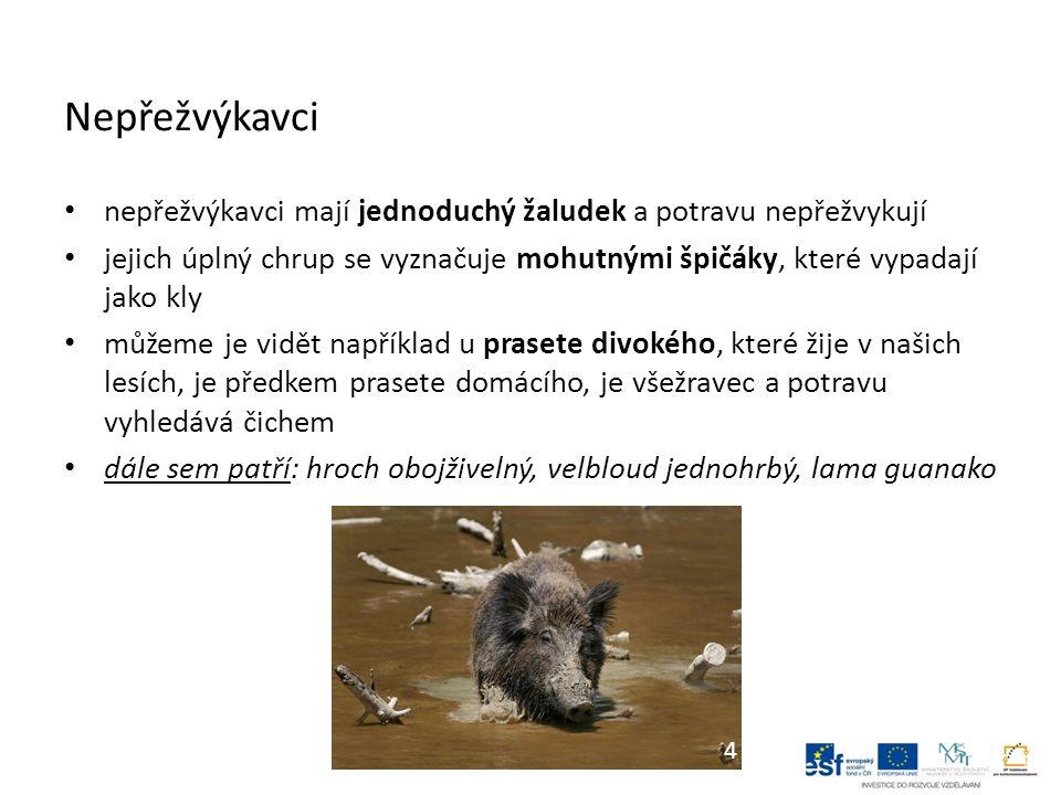Nepřežvýkavci nepřežvýkavci mají jednoduchý žaludek a potravu nepřežvykují jejich úplný chrup se vyznačuje mohutnými špičáky, které vypadají jako kly můžeme je vidět například u prasete divokého, které žije v našich lesích, je předkem prasete domácího, je všežravec a potravu vyhledává čichem dále sem patří: hroch obojživelný, velbloud jednohrbý, lama guanako 4