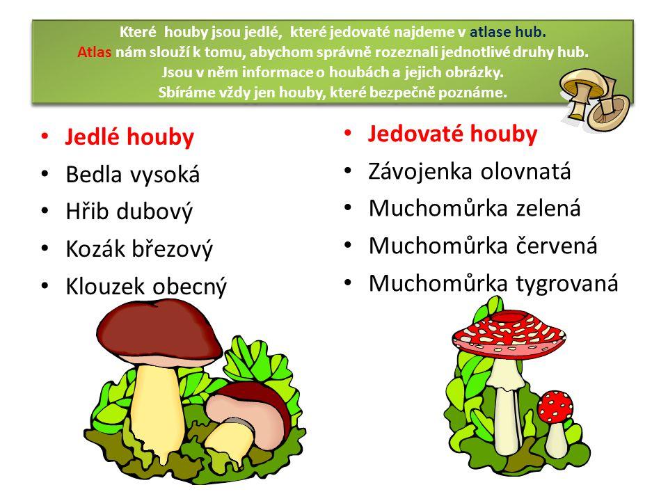 Které houby jsou jedlé, které jedovaté najdeme v atlase hub.