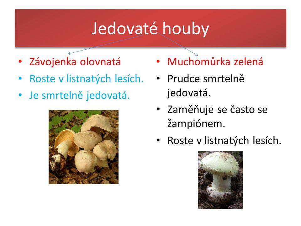 Jedovaté houby Závojenka olovnatá Roste v listnatých lesích.