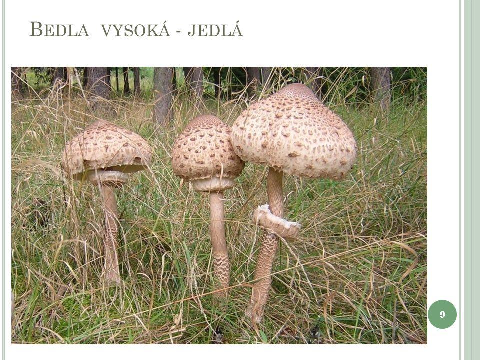 B EDLA VYSOKÁ - JEDLÁ 99