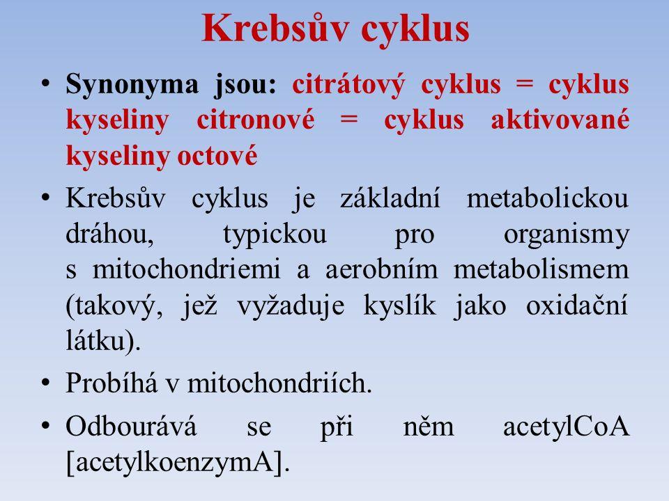 Krebsův cyklus Synonyma jsou: citrátový cyklus = cyklus kyseliny citronové = cyklus aktivované kyseliny octové Krebsův cyklus je základní metabolickou dráhou, typickou pro organismy s mitochondriemi a aerobním metabolismem (takový, jež vyžaduje kyslík jako oxidační látku).