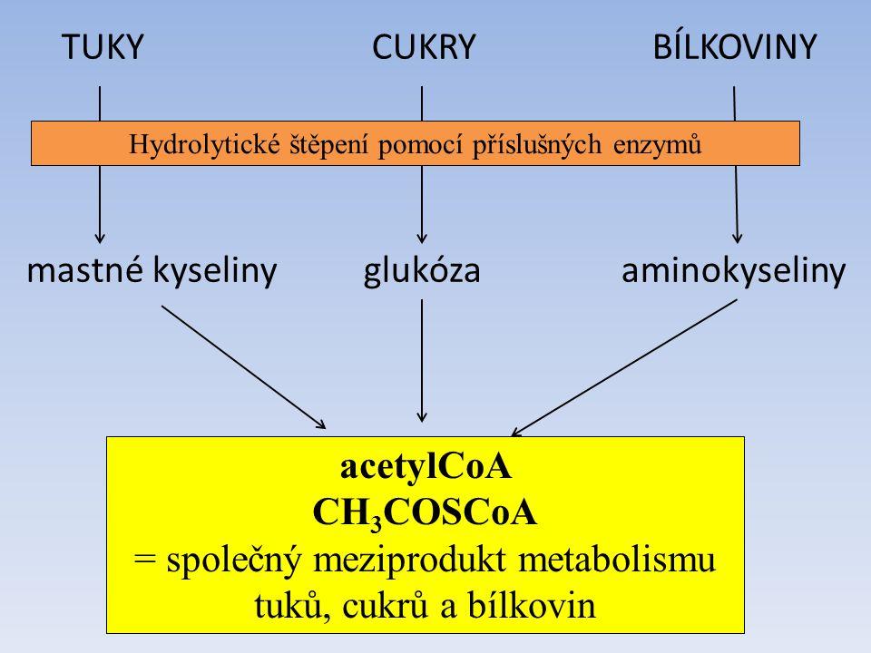 TUKY CUKRY BÍLKOVINY mastné kyseliny glukóza aminokyseliny acetylCoA CH 3 COSCoA = společný meziprodukt metabolismu tuků, cukrů a bílkovin Hydrolytické štěpení pomocí příslušných enzymů