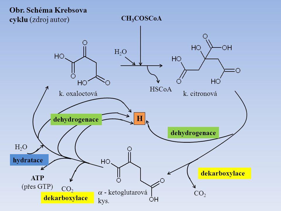 CH 3 COSCoA k. citronová  - ketoglutarová kys. k. oxaloctová H2OH2O HSCoA H CO 2 dekarboxylace CO 2 ATP (přes GTP) H2OH2O hydratace Obr. Schéma Krebs