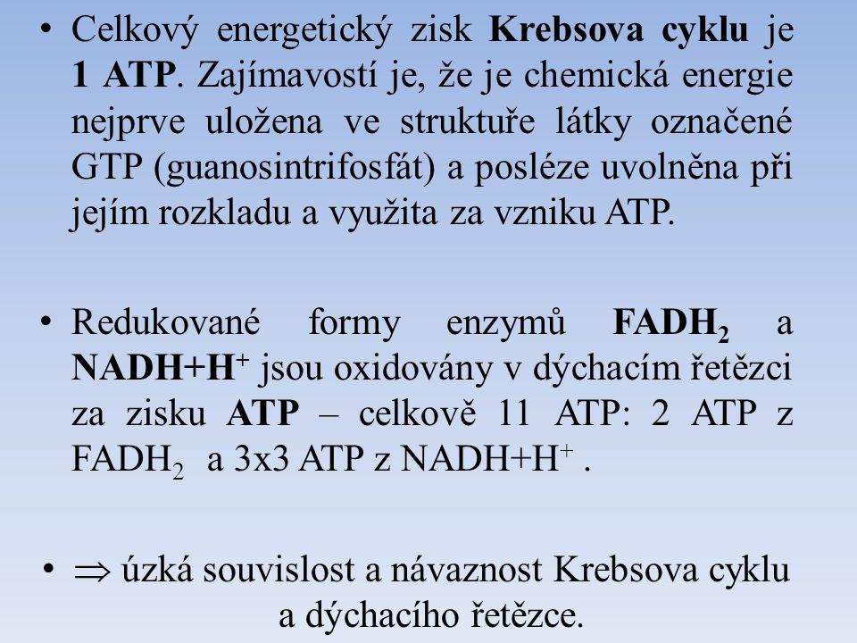 Celkový energetický zisk Krebsova cyklu je 1 ATP. Zajímavostí je, že je chemická energie nejprve uložena ve struktuře látky označené GTP (guanosintrif
