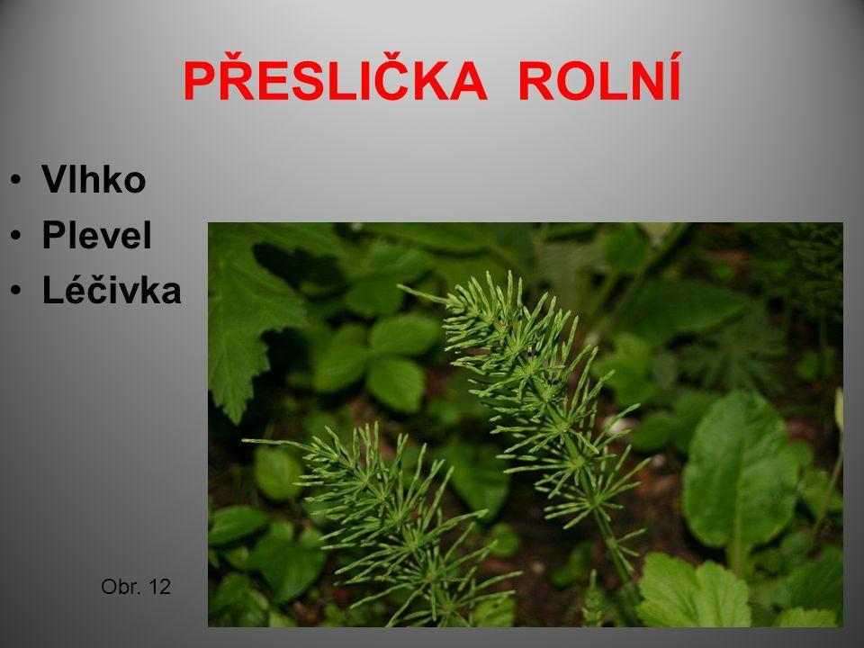 PŘESLIČKA ROLNÍ Vlhko Plevel Léčivka Obr. 12