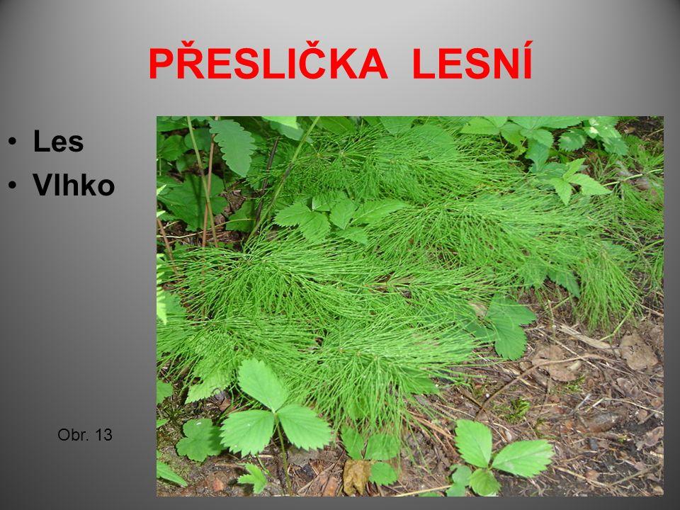 PŘESLIČKA LESNÍ Les Vlhko Obr. 13