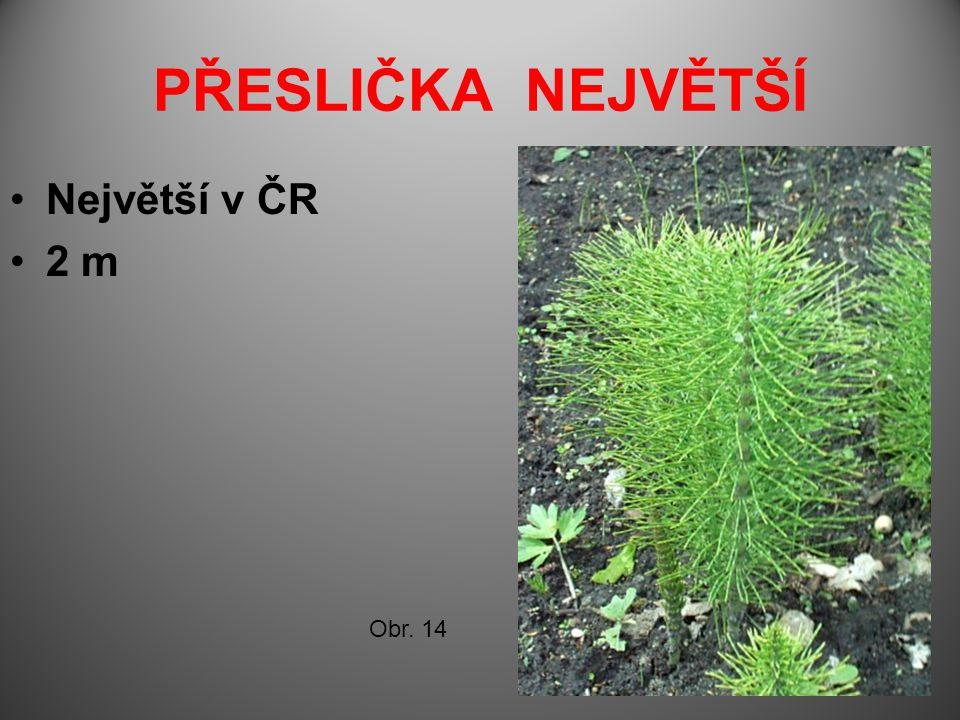 PŘESLIČKA NEJVĚTŠÍ Největší v ČR 2 m Obr. 14