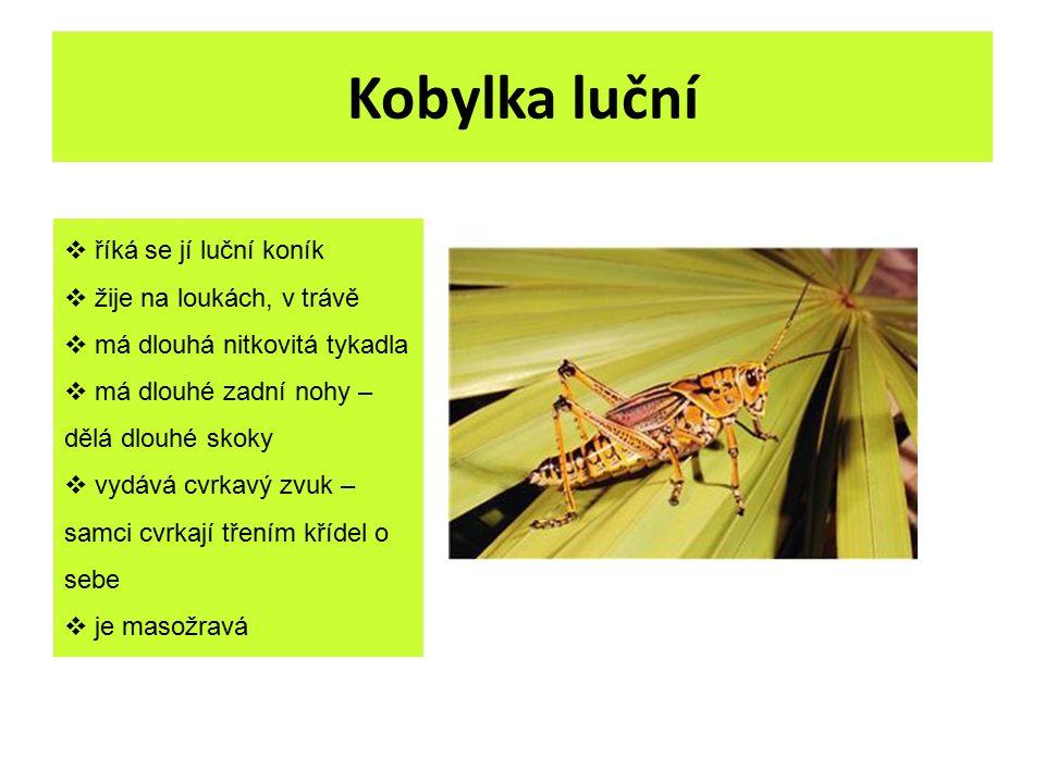 Kobylka luční  říká se jí luční koník  žije na loukách, v trávě  má dlouhá nitkovitá tykadla  má dlouhé zadní nohy – dělá dlouhé skoky  vydává cv