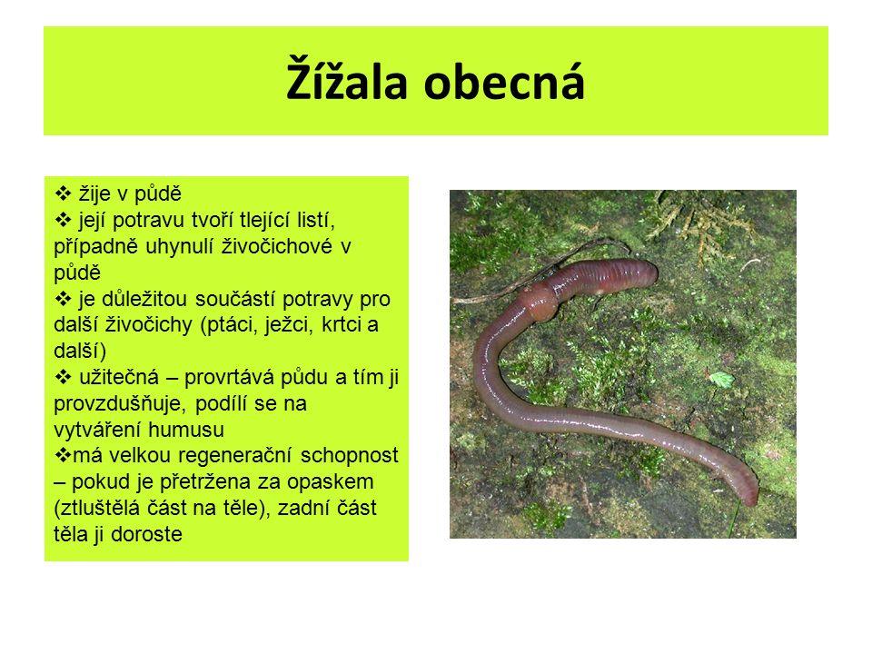 Žížala obecná  žije v půdě  její potravu tvoří tlející listí, případně uhynulí živočichové v půdě  je důležitou součástí potravy pro další živočich