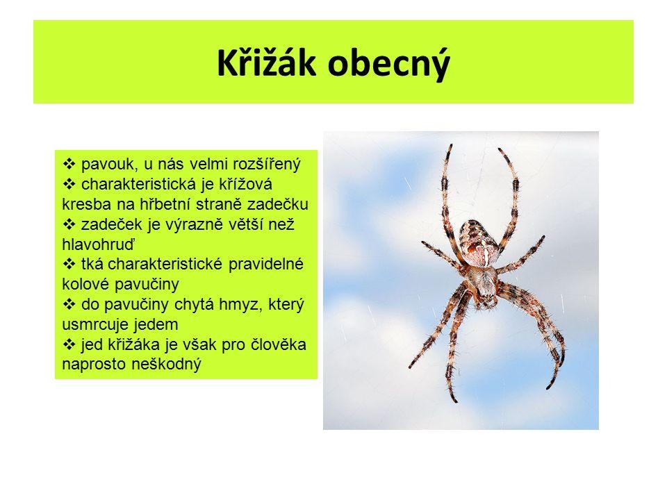Křižák obecný  pavouk, u nás velmi rozšířený  charakteristická je křížová kresba na hřbetní straně zadečku  zadeček je výrazně větší než hlavohruď