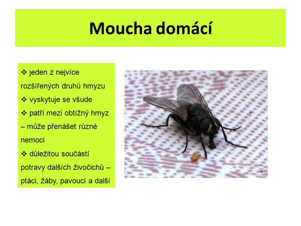 Moucha domácí  jeden z nejvíce rozšířených druhů hmyzu  vyskytuje se všude  patří mezi obtížný hmyz – může přenášet různé nemoci  důležitou součás