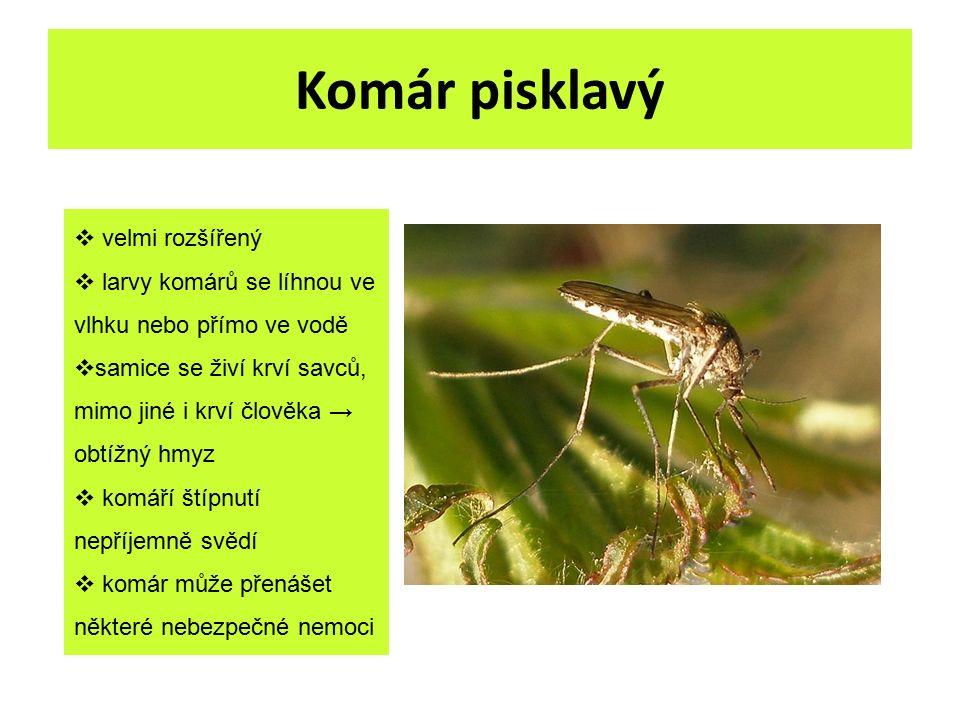 Komár pisklavý  velmi rozšířený  larvy komárů se líhnou ve vlhku nebo přímo ve vodě  samice se živí krví savců, mimo jiné i krví člověka → obtížný