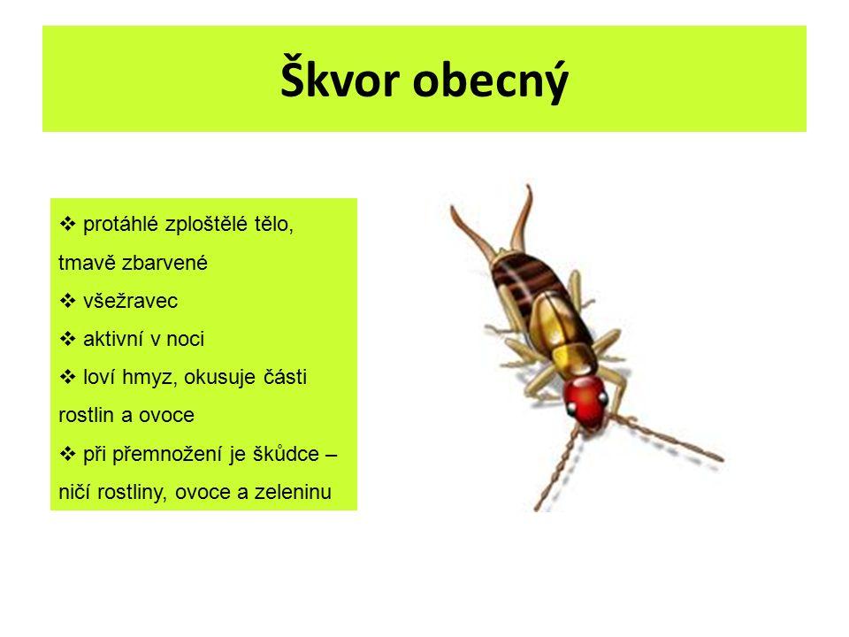 Škvor obecný  protáhlé zploštělé tělo, tmavě zbarvené  všežravec  aktivní v noci  loví hmyz, okusuje části rostlin a ovoce  při přemnožení je šků