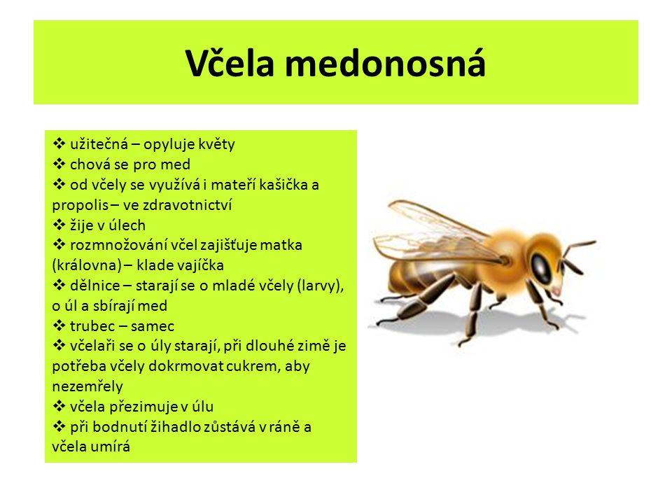 Včela medonosná  užitečná – opyluje květy  chová se pro med  od včely se využívá i mateří kašička a propolis – ve zdravotnictví  žije v úlech  ro