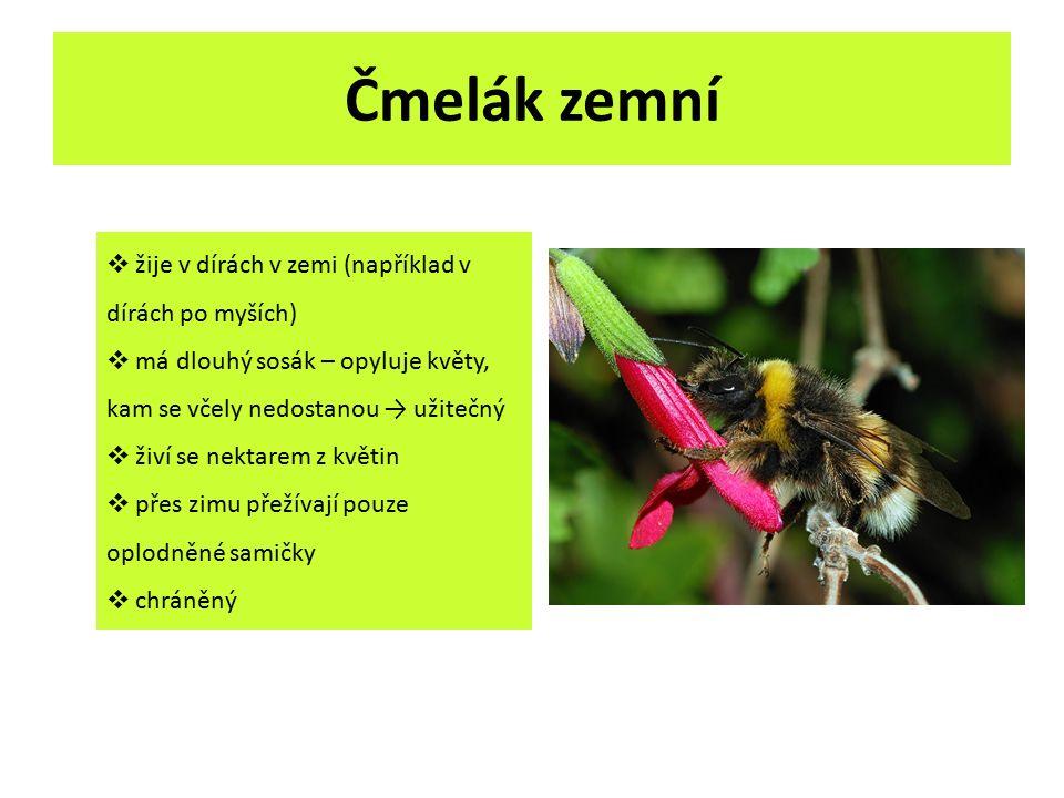 Čmelák zemní  žije v dírách v zemi (například v dírách po myších)  má dlouhý sosák – opyluje květy, kam se včely nedostanou → užitečný  živí se nek
