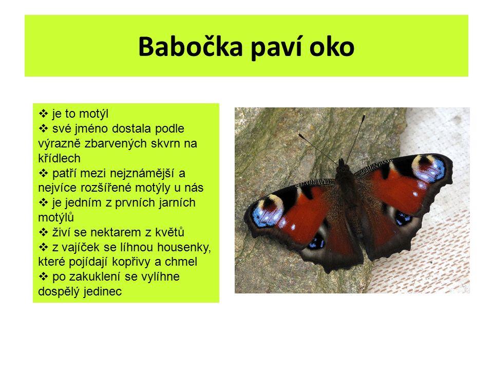 Babočka paví oko  je to motýl  své jméno dostala podle výrazně zbarvených skvrn na křídlech  patří mezi nejznámější a nejvíce rozšířené motýly u ná