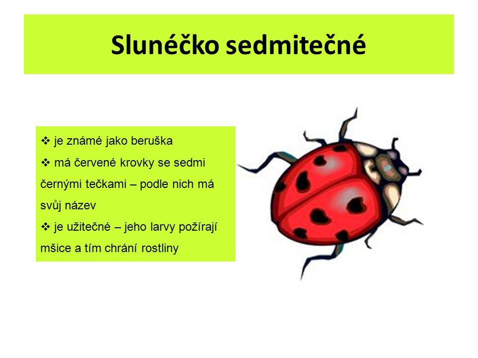 Slunéčko sedmitečné  je známé jako beruška  má červené krovky se sedmi černými tečkami – podle nich má svůj název  je užitečné – jeho larvy požíraj