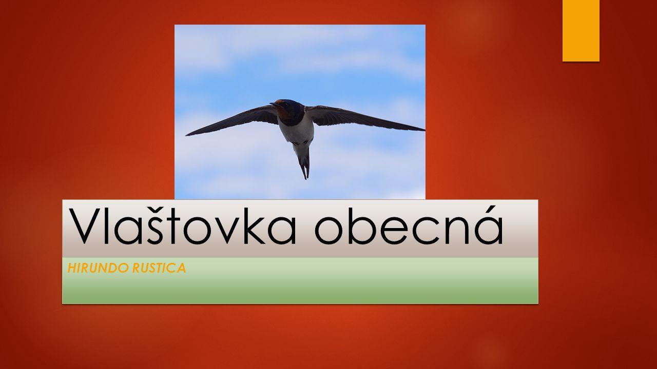 Pracovní list  Doplň vynechané slovo.Vlaštovka je drobný pták živící se hmyzem.