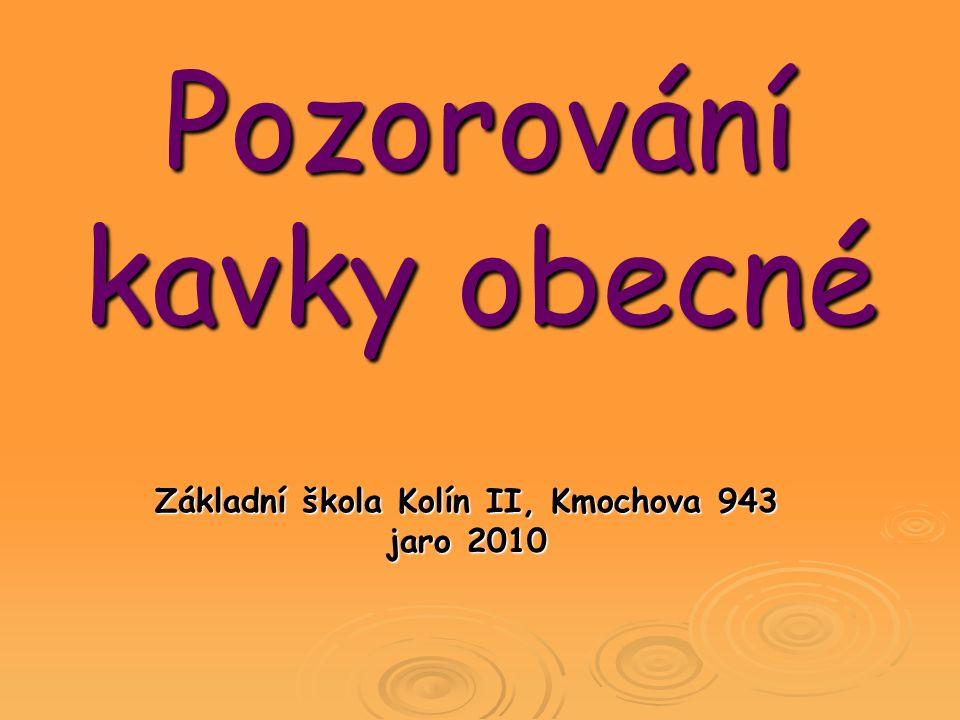 Pozorování kavky obecné Základní škola Kolín II, Kmochova 943 jaro 2010