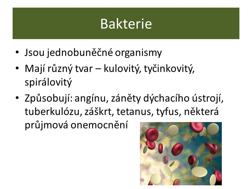 Bakterie Jsou jednobuněčné organismy Mají různý tvar – kulovitý, tyčinkovitý, spirálovitý Způsobují: angínu, záněty dýchacího ústrojí, tuberkulózu, záškrt, tetanus, tyfus, některá průjmová onemocnění