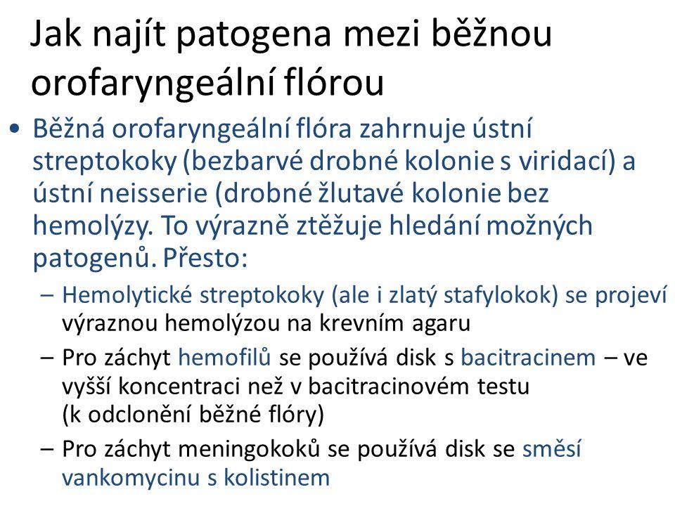 Jak najít patogena mezi běžnou orofaryngeální flórou Běžná orofaryngeální flóra zahrnuje ústní streptokoky (bezbarvé drobné kolonie s viridací) a ústní neisserie (drobné žlutavé kolonie bez hemolýzy.