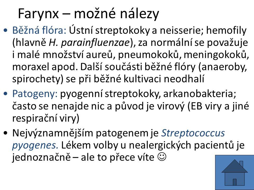 Farynx – možné nálezy Běžná flóra: Ústní streptokoky a neisserie; hemofily (hlavně H.