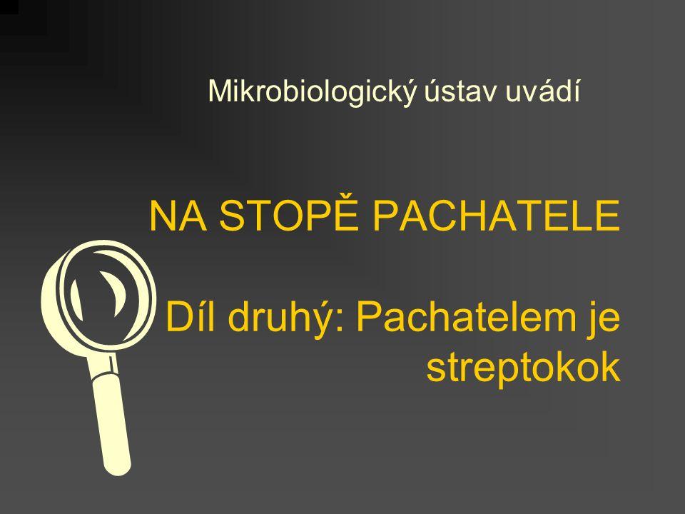 NA STOPĚ PACHATELE Díl druhý: Pachatelem je streptokok Mikrobiologický ústav uvádí 