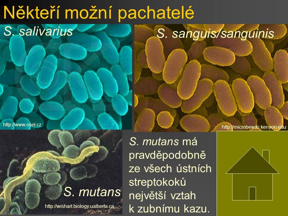 Někteří možní pachatelé http://www.osel.cz S. salivarius http://microbewiki.kenyon.edu S.