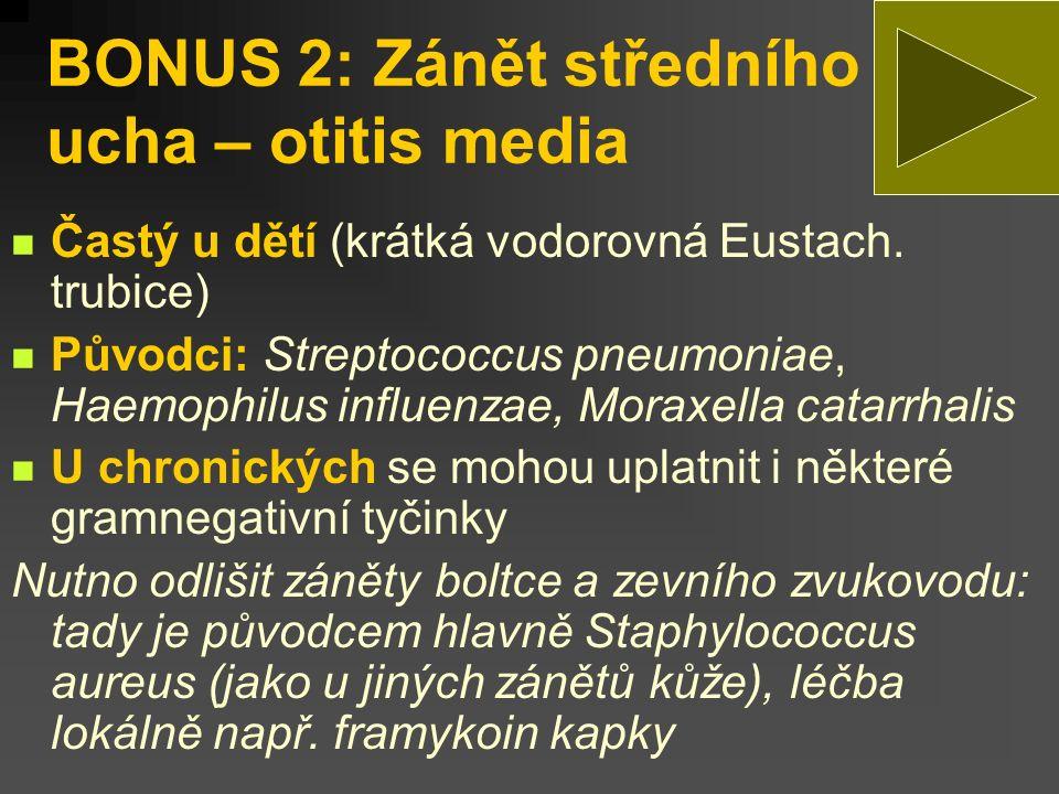 BONUS 2: Zánět středního ucha – otitis media Častý u dětí (krátká vodorovná Eustach.