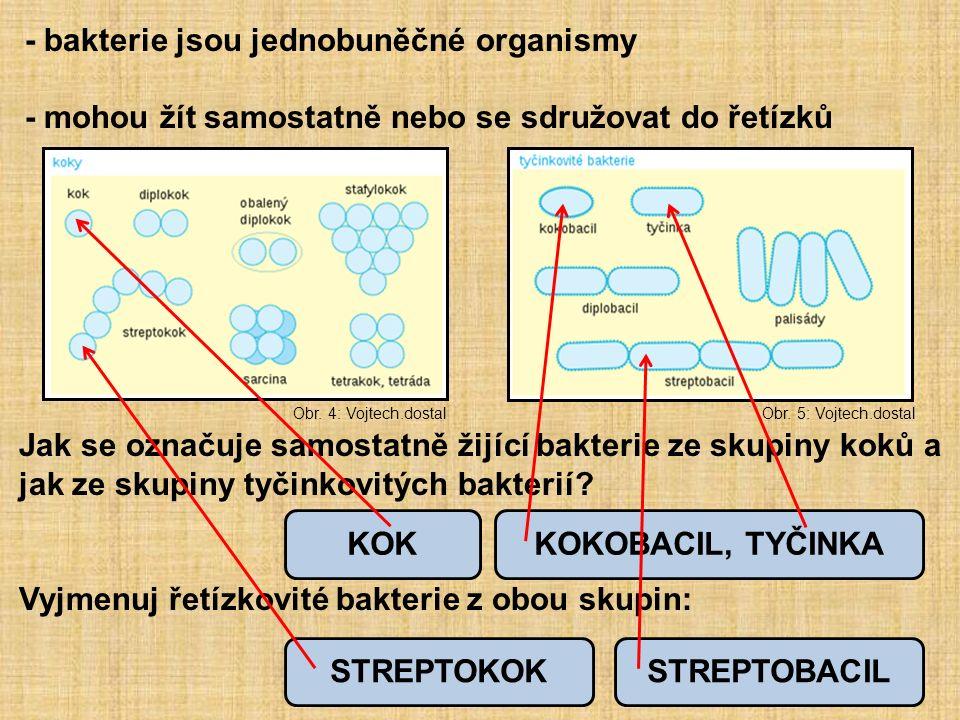 - bakterie jsou jednobuněčné organismy - mohou žít samostatně nebo se sdružovat do řetízků Jak se označuje samostatně žijící bakterie ze skupiny koků a jak ze skupiny tyčinkovitých bakterií.