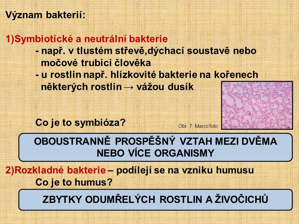 Význam bakterií: 1)Symbiotické a neutrální bakterie - např.