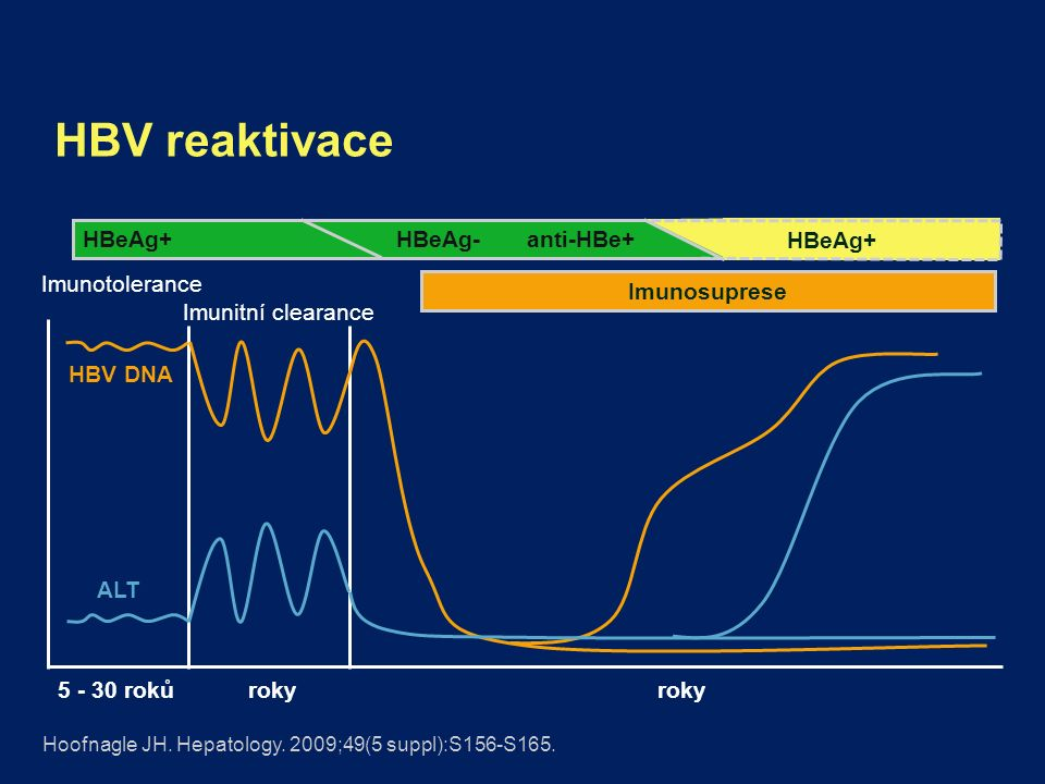 HBV reaktivace Imunotolerance Imunitní clearance HBeAg+HBeAg- anti-HBe+ ALT HBV DNA HBeAg+ Imunosuprese Hoofnagle JH.