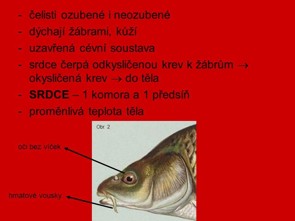 proudový orgán (postranní čára) – slouží k vnímání tlaku vody, proudění vody plynový měchýř – nepárový orgán, ale může být dvojdílný rozmnožování: -oddělené pohlaví – GONOCHORISTÉ -samičí pohlavní buňky = vajíčka (JIKRY)  JIKERNAČKY Obr.