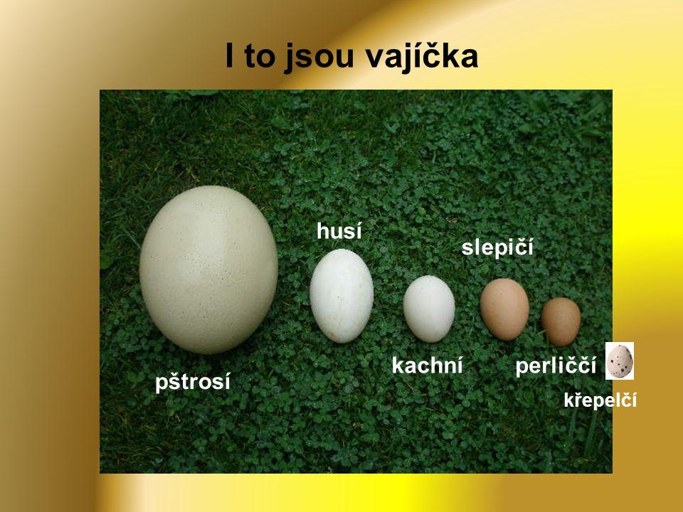 I to jsou vajíčka pštrosí husí kachní slepičí perliččí křepelčí