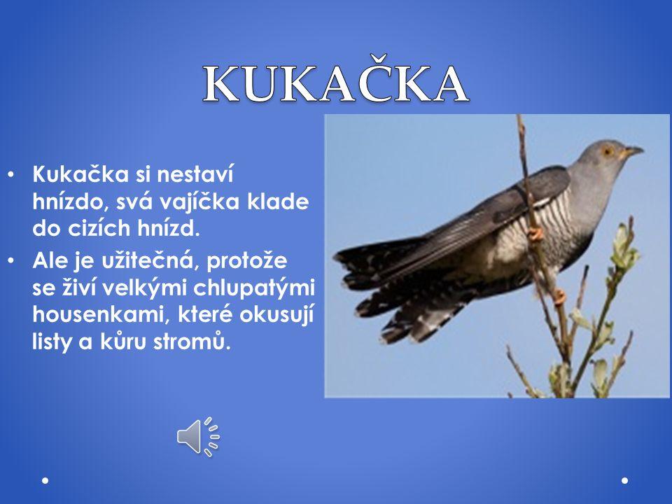 Lidé odedávna věří, že vlaštovky nosí štěstí Vlaštovka se živí hmyzem Odlétají na podzim do Afriky a vrací se k nám na jaře